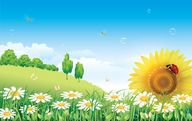 Summer meadow with daisies and sunflowers