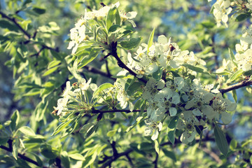 delicate spring blooming twig with white flowers