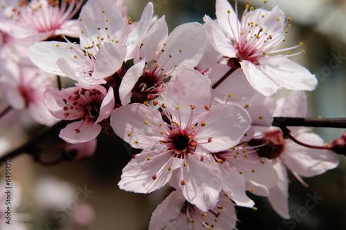 fioritura alberi da frutto © francescodemarco