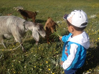 keçilere ot vermek