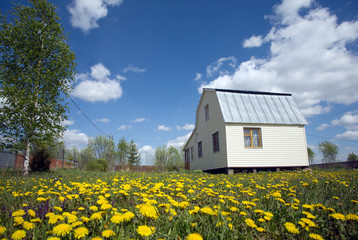 Nice suburban house on lawn with yellow dandelions
