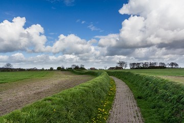 Cobblestone road in a pasture in The Netherlands