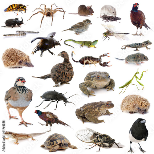 In de dag Kikker european wildlife
