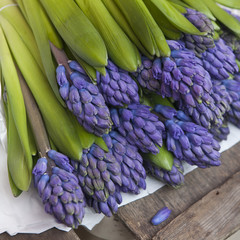 blue hyacinths  on the  wooden counter