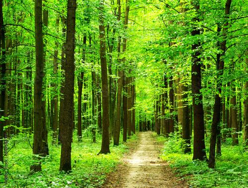 Keuken foto achterwand Bossen forest