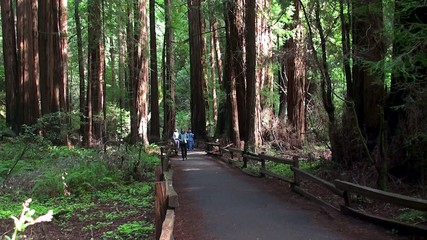 Tourists at the Muir Woods National Monument. San Francisco,