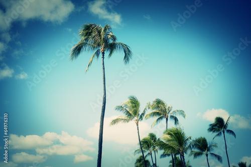 青空とヤシの木