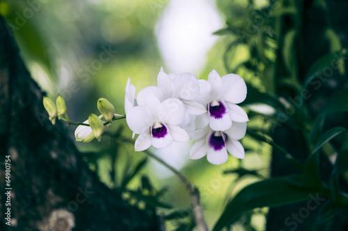 vintage  orchid.