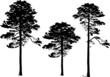 three pine silhouettes isolated on white