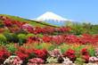 春爛漫の富士