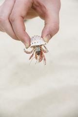 Hand holding crab
