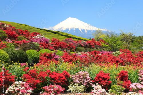 Papiers peints Azalea 春爛漫の富士