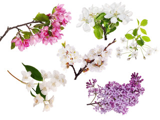 set of seven blossoming tree branches isolated on white