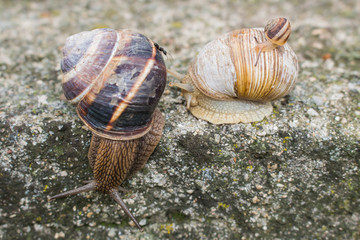 Three Snails and One Ant