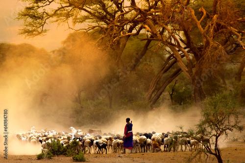 Fotobehang Overige shepherd leading a flock of goats