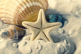 Seashells and starfish on sand