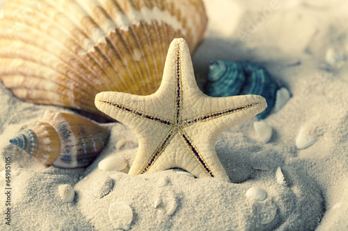 Fototapeta Seashells and starfish on sand