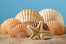 Étoiles de mer et des coquillages sur le sable