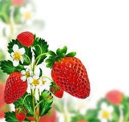 Sprig of flowers strawberries