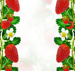 Sprig of flowers strawberries