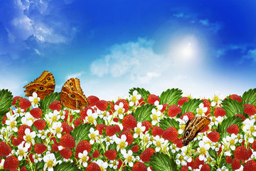 Summer landscape of berries and flowers strawberries