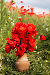 Nice bouquet of red poppy flowers
