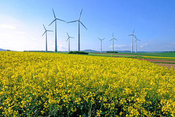 Lots of windwheels in a field of blooming rapeseed