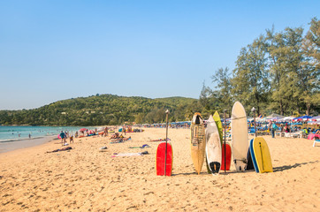 Surfboards at a tropical beach - Extreme sport body boards