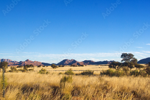Canvas Zuid Afrika African savanna landscape, Namibia, South Africa