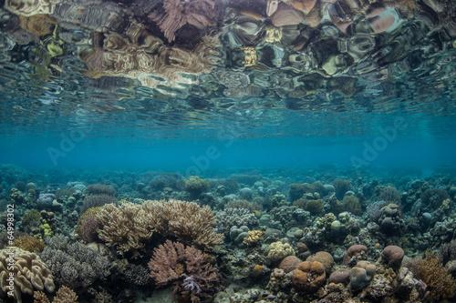 Papiers peints Recifs coralliens Shallow Pacific Reef 1