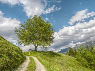 Baum mit Holzbank im Grünen in HDR