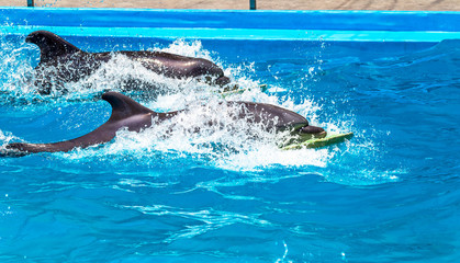 Glad beautiful dolphin in blue water in the swimming pool on a b