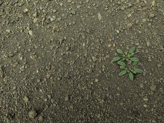 Textura suelo, tierra.