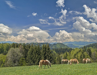 Pferdeweide, Schwarzwald, Deutschland