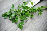 Natka pietruszki, nać pietruszki, zielona pietruszka