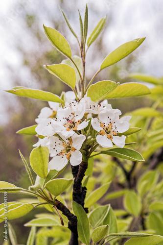 Foto op Plexiglas Landschappen цветение весной15