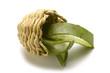 Aloe vera Echte Aloes zwyczajny Алоэ настоящее