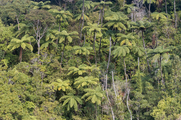 tree ferns growing in rainforest