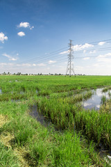 Pylon rice field