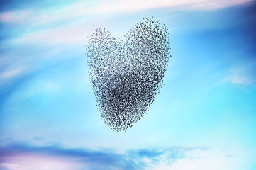 Flock of birds on forming a heart