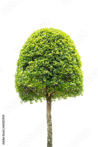 Aluminium Bonsai dwarf tree isolated on white