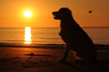 Hond zit op het strand bij zonsondergang