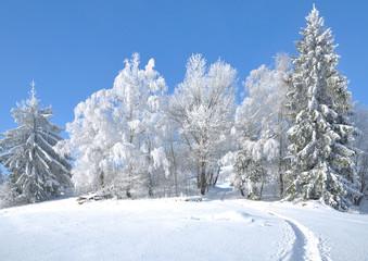 Winter im Bayerischen Wald mit Wanderpfad