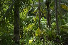 Üppigen tropischen Dschungel Regenwald-Hintergrund