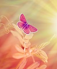 Little butterfly on spring grass