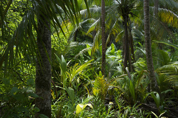 Lush Tropical Jungle Rainforest Background