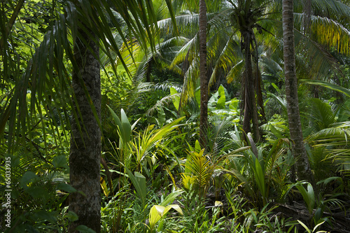 Foto op Canvas Zuid-Amerika land Lush Tropical Jungle Rainforest Background