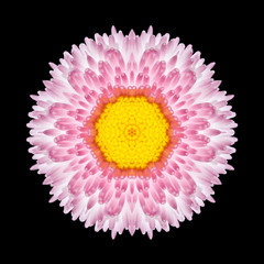 Pink Mandala Daisy Flower Kaleidoscope Isolated on Black