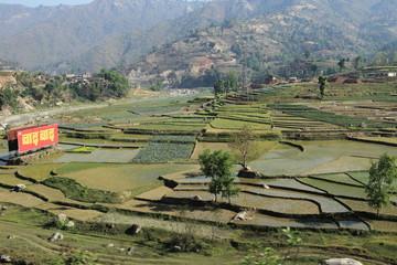 Landwirtschaft in Nepal