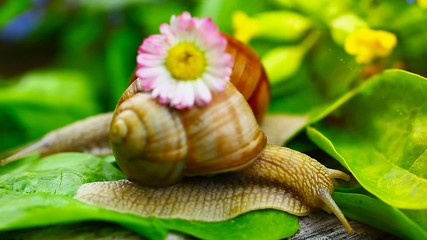 Snails near green leaves and meadow flowers episode 8